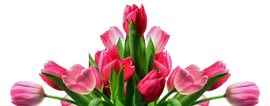 Folower picture clip art download Flowers of Fort Lauderdale | Broward Flower Delivery (954) 566-0099 clip art download