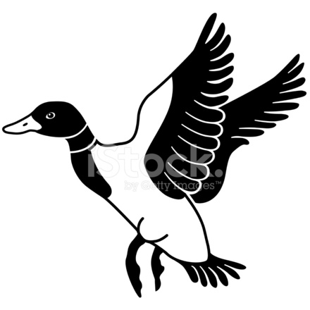 Flying in stock vector. Floating mallard duck clipart black and white