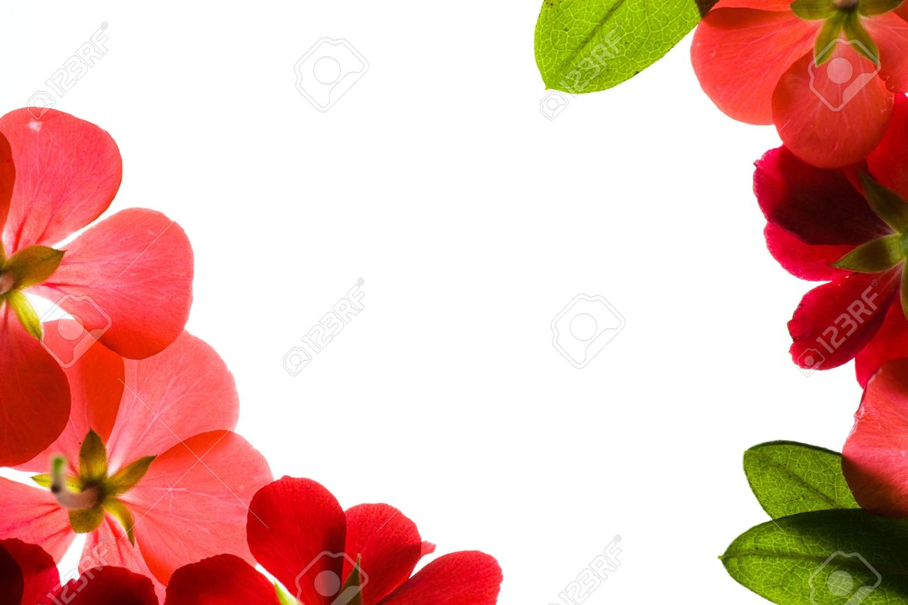 Floral borders images png library library Floral Borders Stock Photo, Picture And Royalty Free Image. Image ... png library library