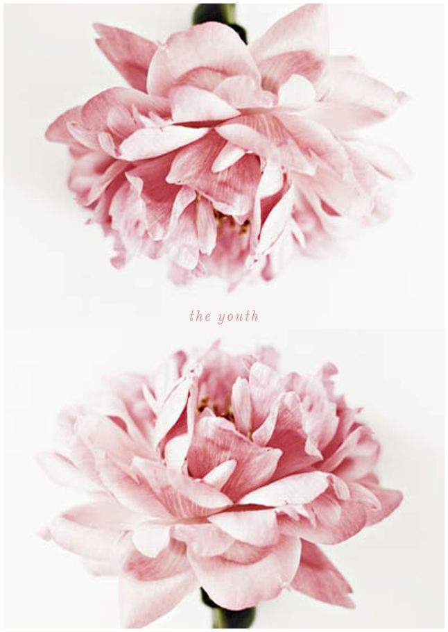 Floral graphic designs image royalty free stock 17 Best ideas about Flower Graphic Design on Pinterest   Poster ... image royalty free stock