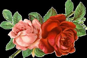 Flores clipart gratis png free download Clipart flores gratis 2 » Clipart Portal png free download