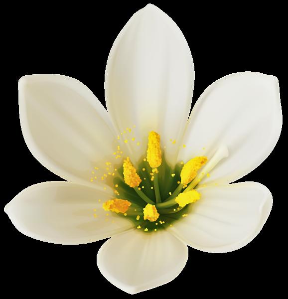 White flower clipart