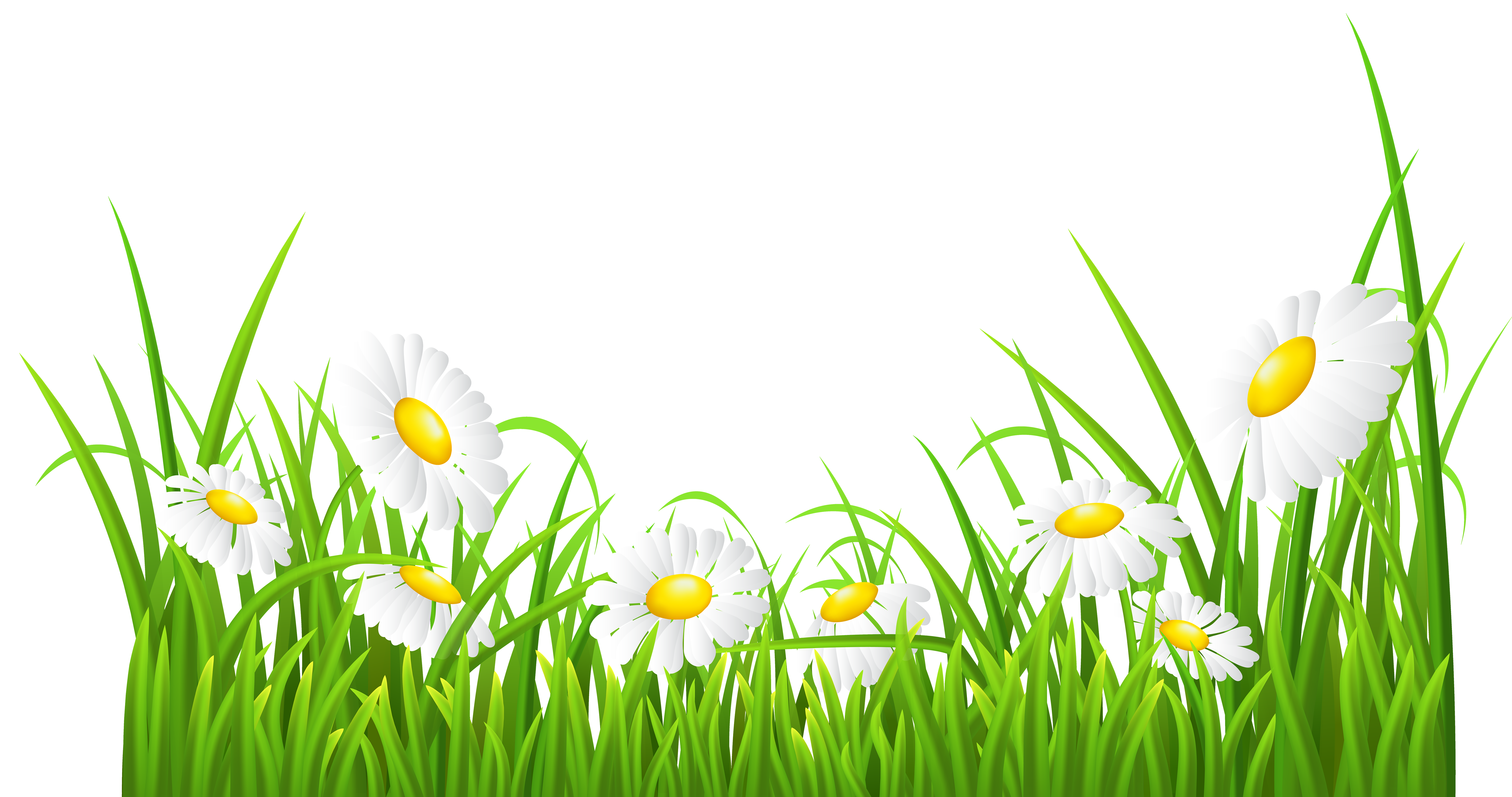 Flower and grass clipart clip art library White Daisies and Grass Transparent PNG Clip Art Image | Backgroup ... clip art library