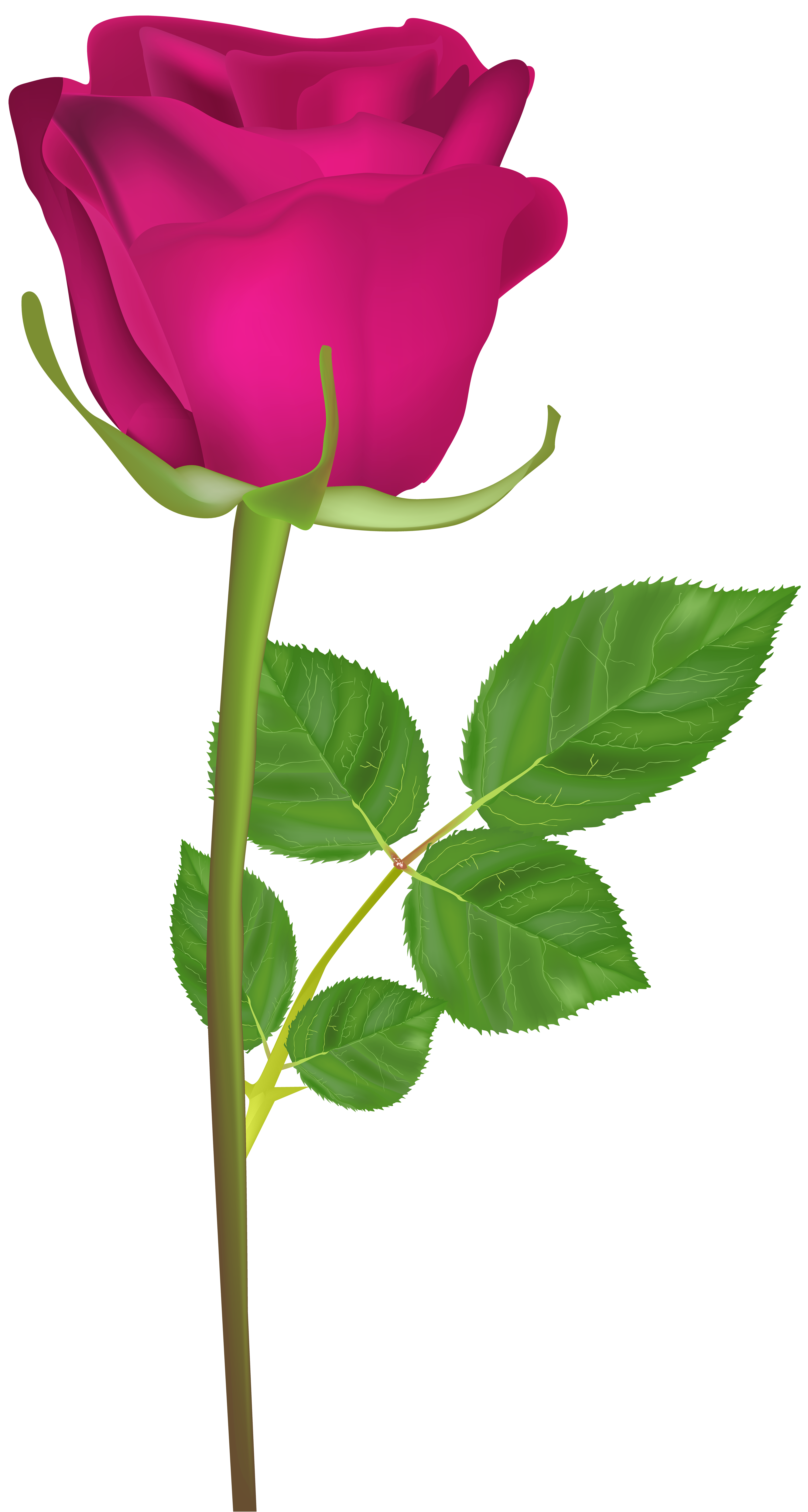 Pink flower with stem clipart graphic free library Rose with Stem Pink PNG Clip Art Image | Gallery Yopriceville ... graphic free library