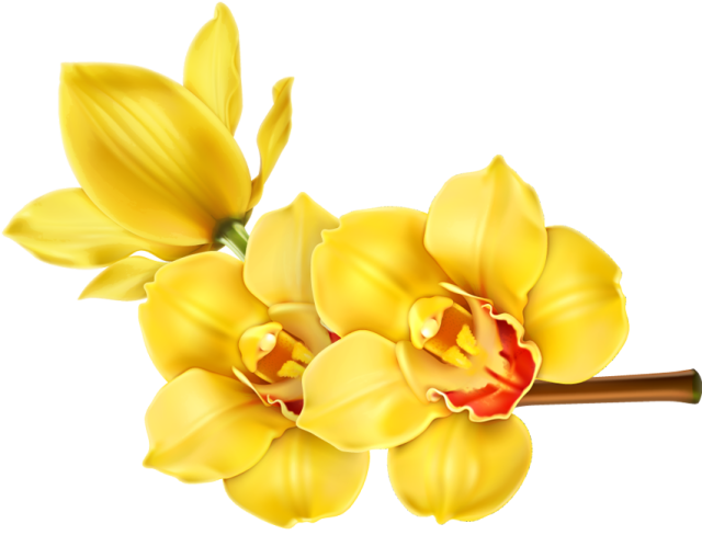 Flower blooming clipart clip royalty free Clip Art of beautiful tropical flowers.: Clip Art of Orchid Blooms ... clip royalty free