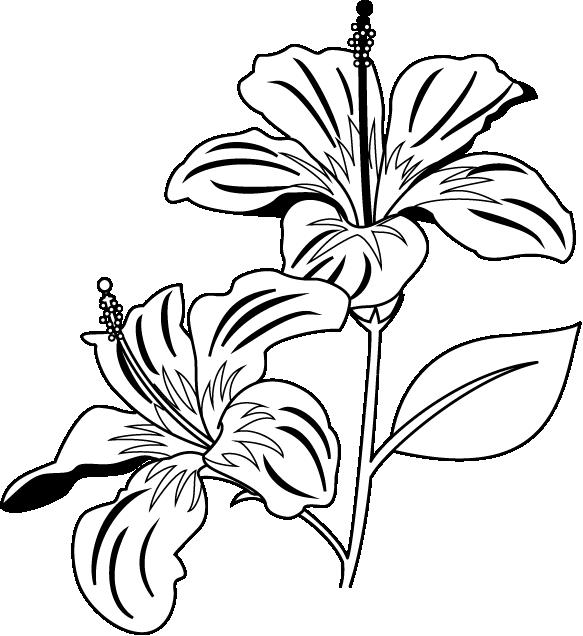 Flower bouquet black and white clipart clipart transparent stock 28+ Collection of Gumamela Flower Clipart Black And White | High ... clipart transparent stock