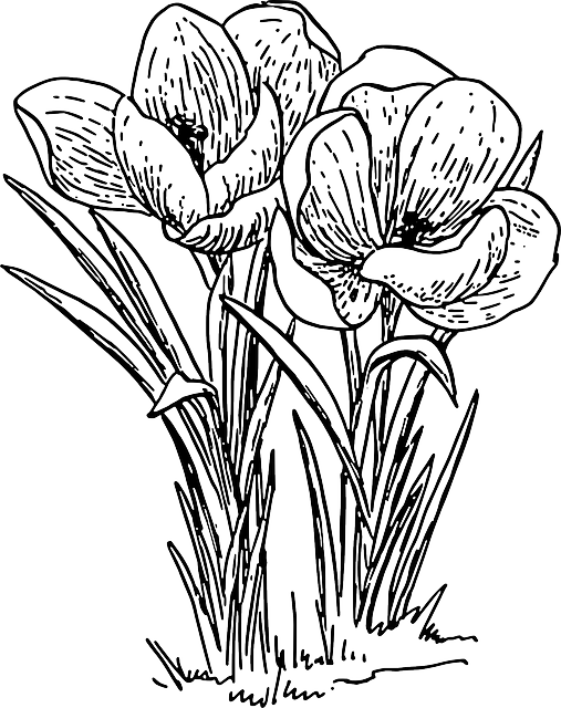 Flower bouquet outline clipart graphic transparent Free Image on Pixabay - Crocus, Flower, Plant, Bulb, Spring ... graphic transparent