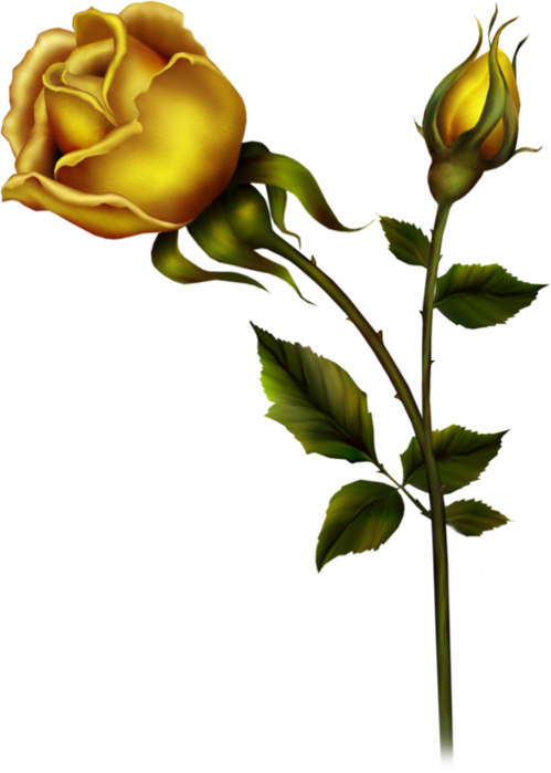 Yellow rose with bud. Flower buds clipart