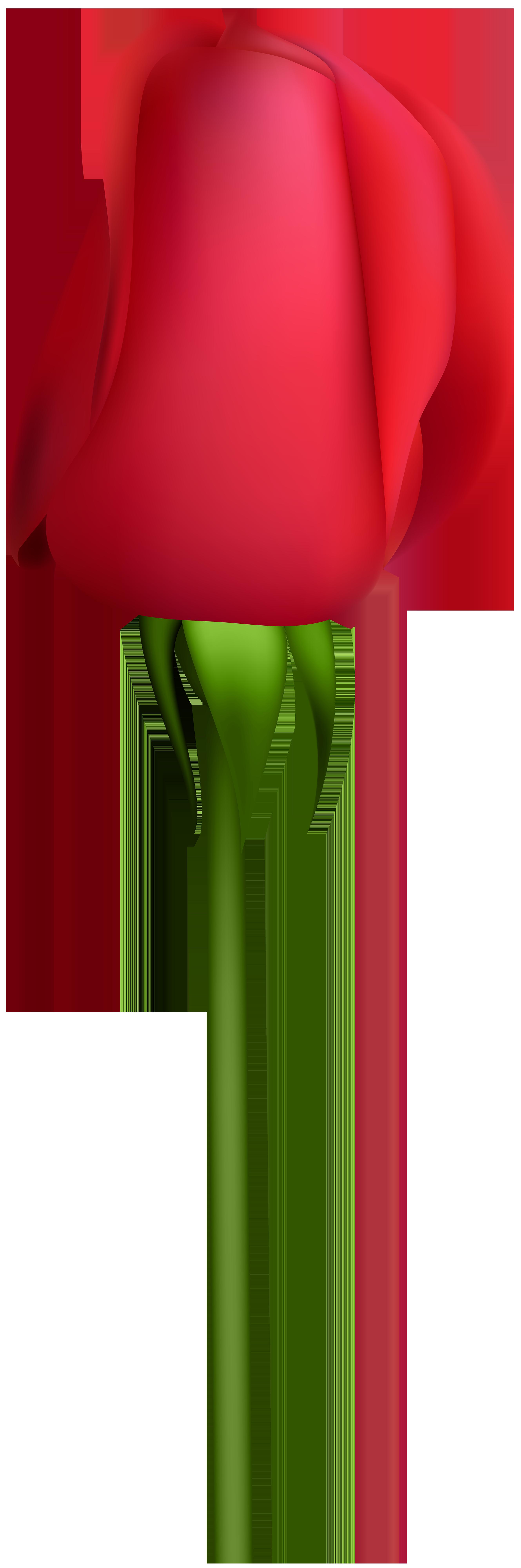 Rose bud transparent clip. Flower buds clipart