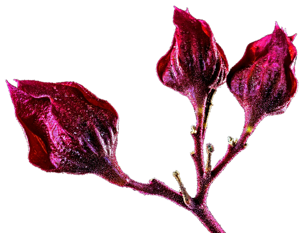 Flower buds clipart. Tropical by jeanicebartzen on
