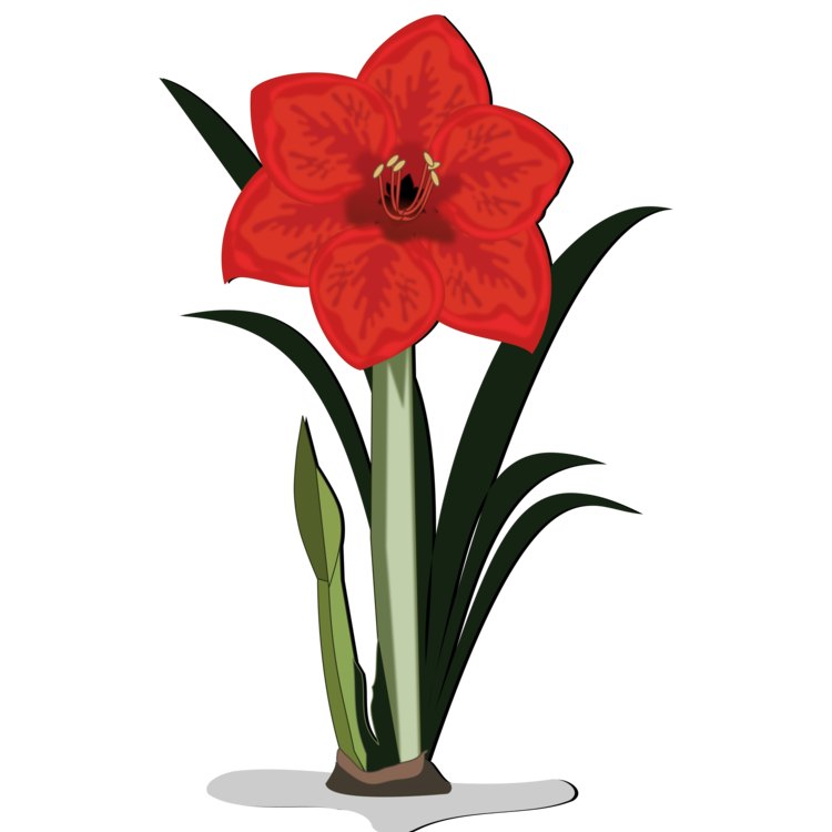 Flower bulb clipart clip free Jersey lily Cut flowers Amaryllis Bulb free commercial clipart ... clip free