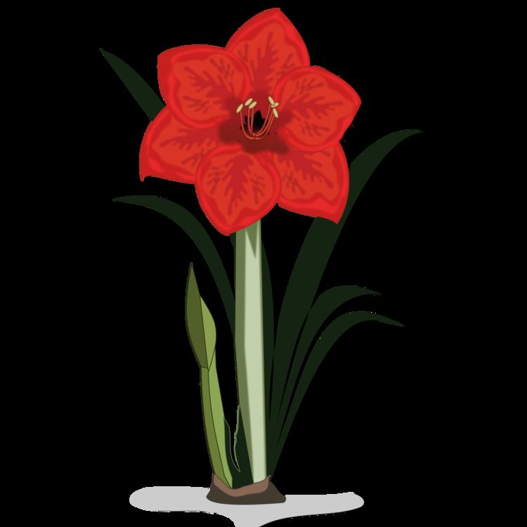Jersey lily cut flowers. Flower bulb clipart