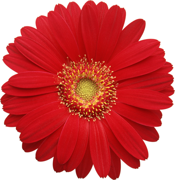 Flower burst clipart image freeuse library http://favata26.rssing.com/chan-13940080/all_p8.html | flowers ... image freeuse library