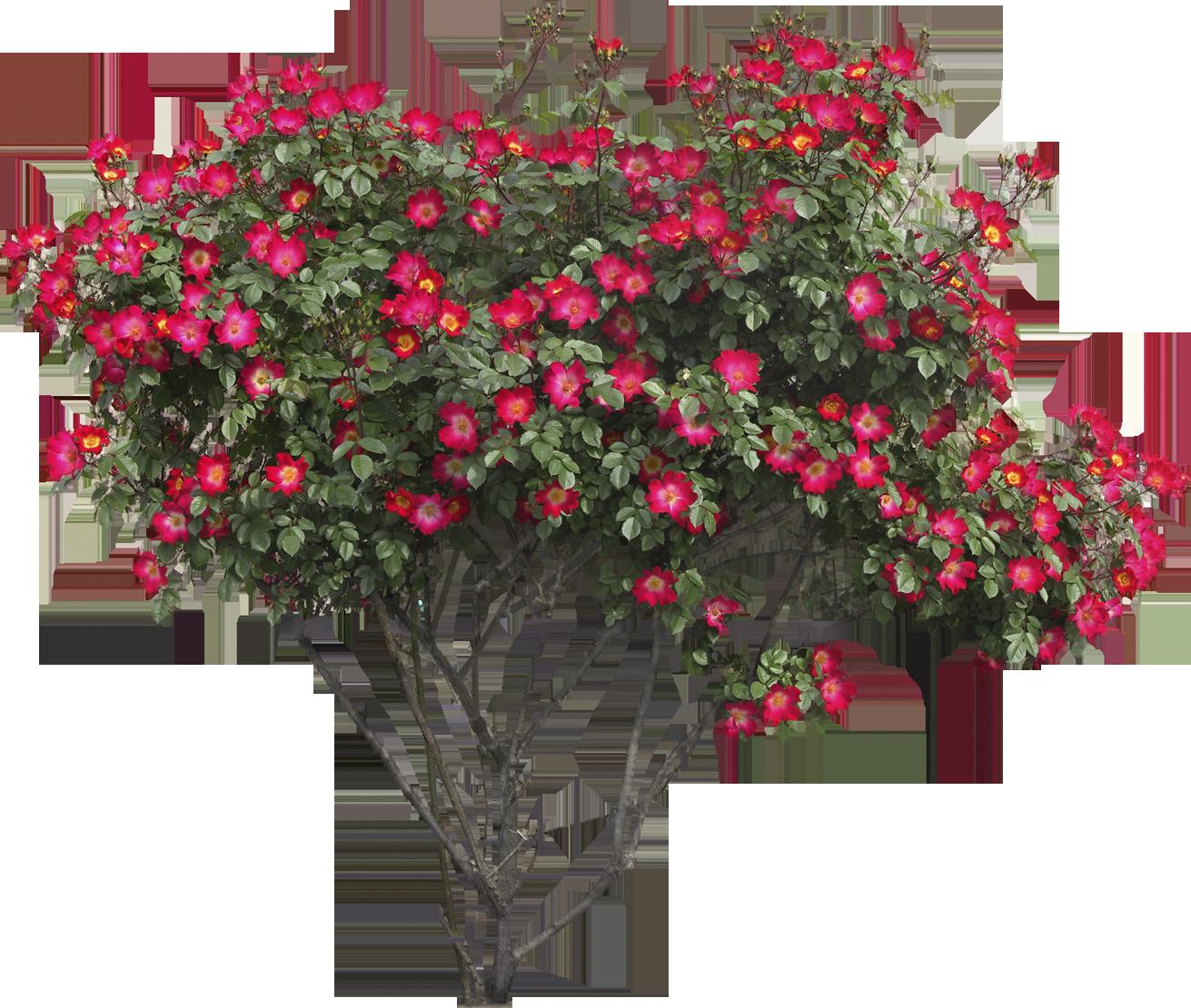 Flower bush clipart banner freeuse stock Bushes PNG images free download, bush PNG banner freeuse stock