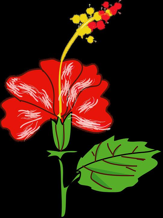 Flower cartoon clipart graphic free Hawaiian Flower Cartoon#4903876 - Shop of Clipart Library graphic free