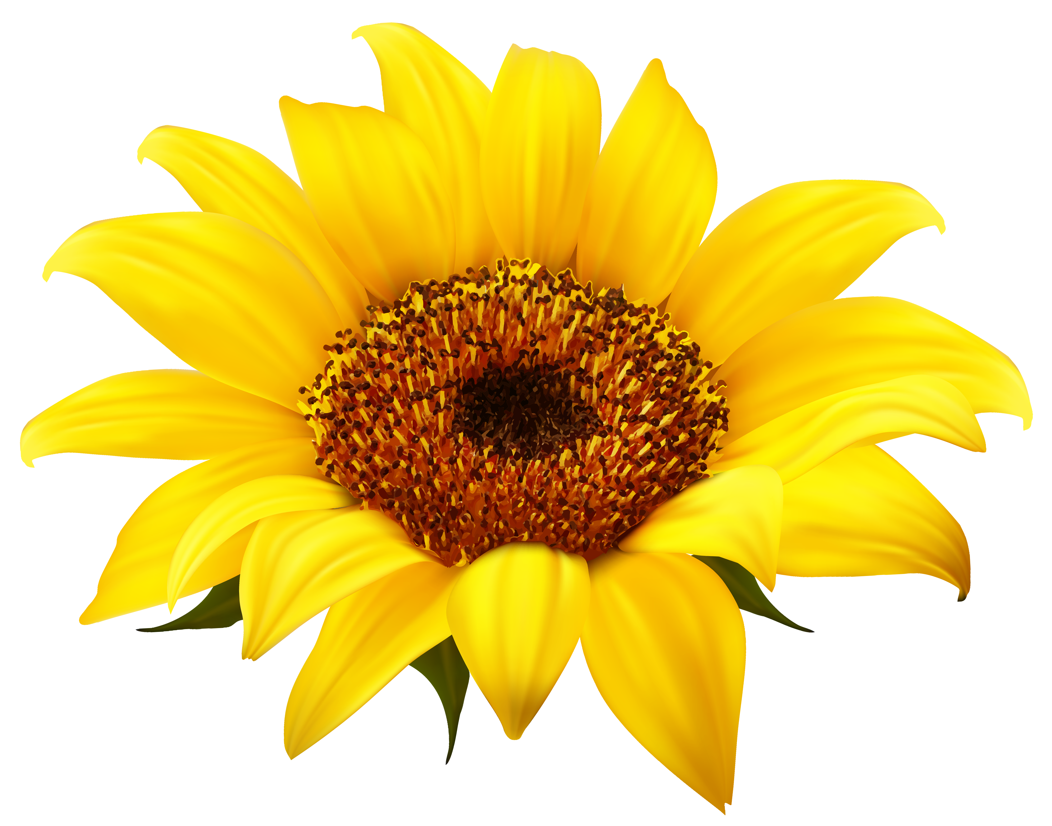 Flower clipart 60 png svg free sunflower clipart #60 | 56 Sunflower Clipart | Clipart Fans svg free