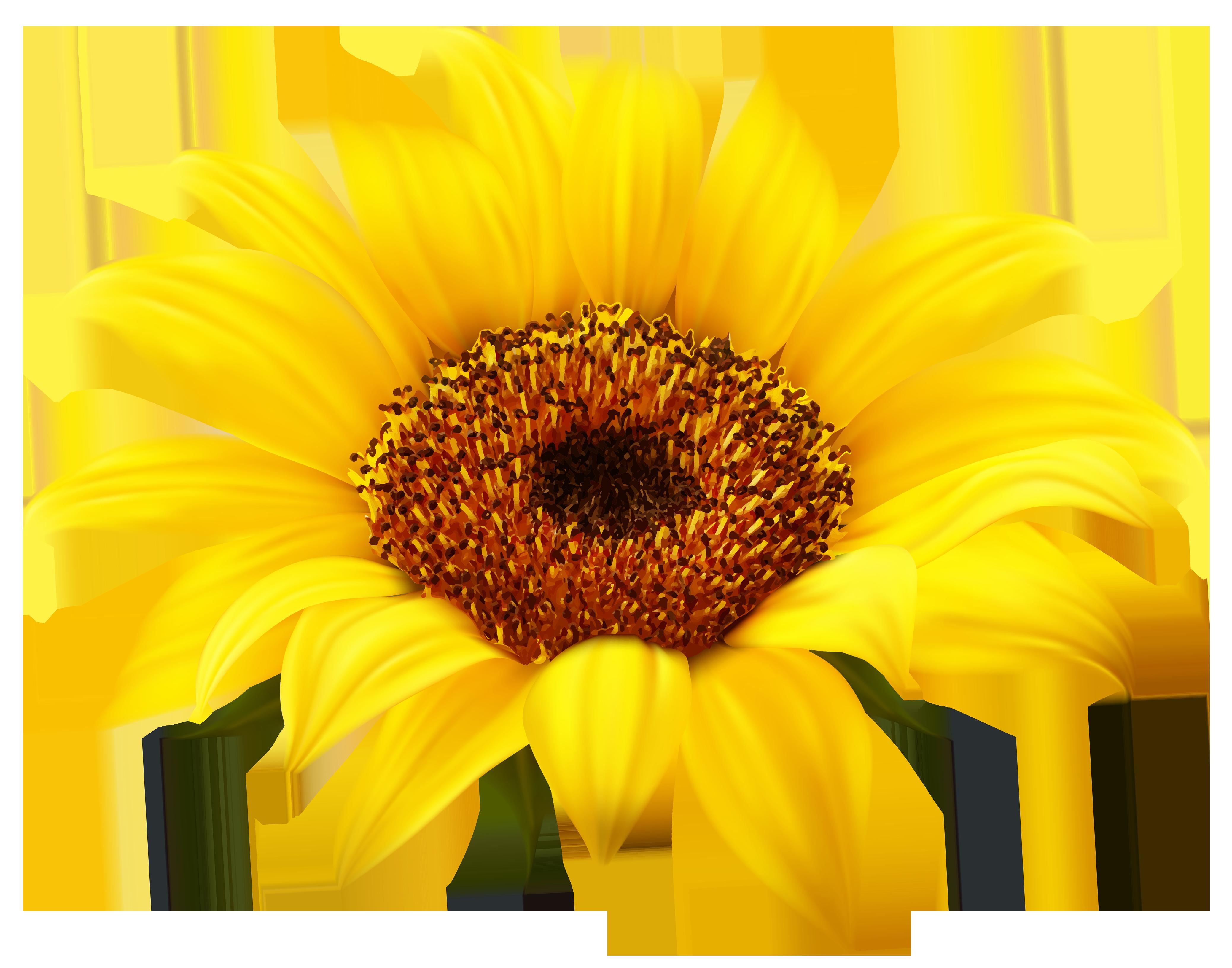 Sun flower seed clipart image transparent sunflower clipart #60 | 56 Sunflower Clipart | Clipart Fans image transparent