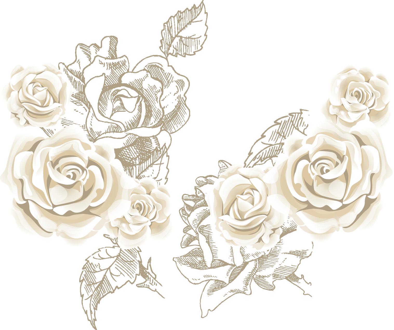 White flower clipart transparent background image free stock Beach rose Flower Clip art - White roses roses background vector sea ... image free stock