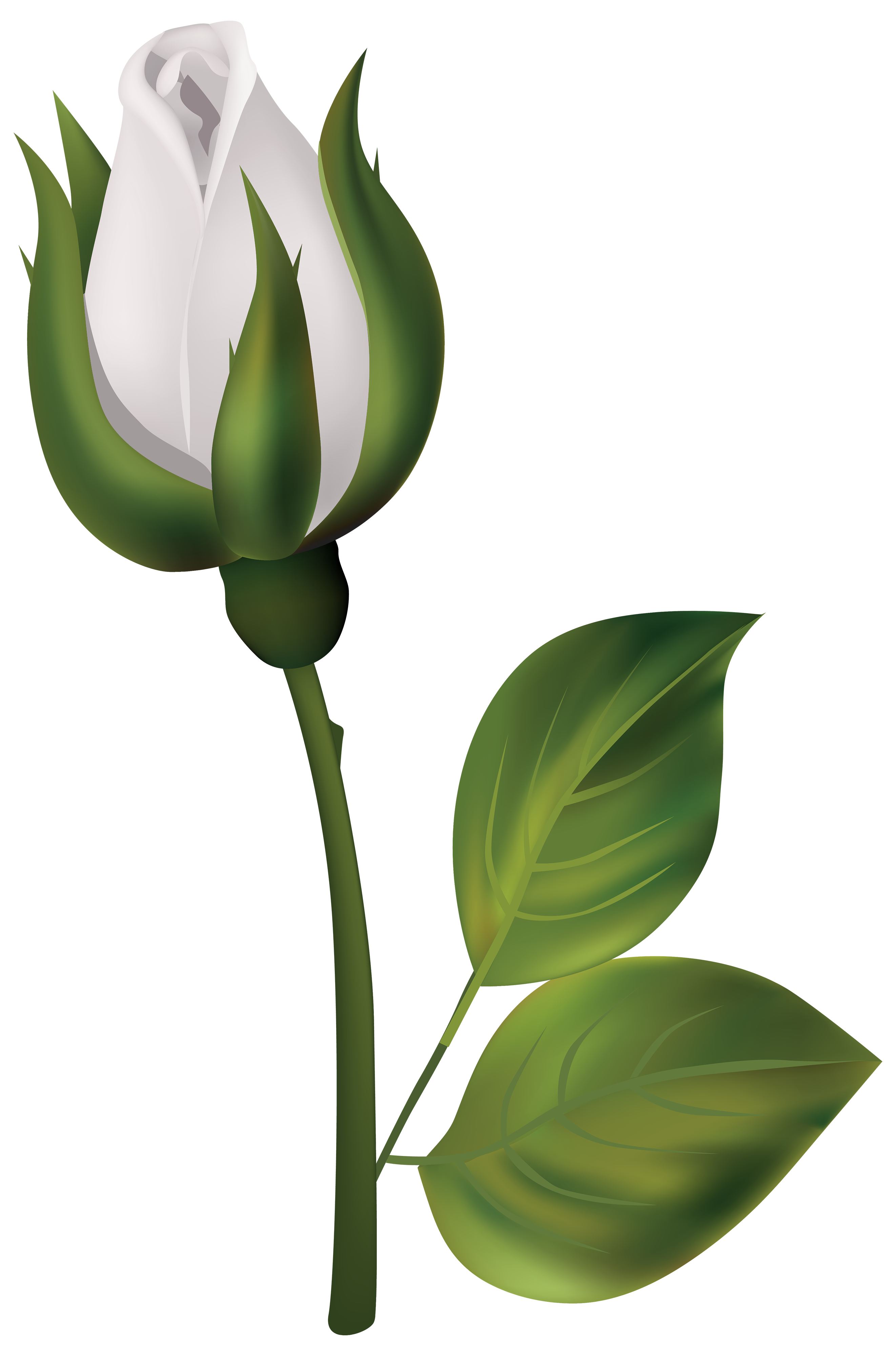 Flower clipart black and white rose vector free stock White Rose Bud PNG Clipart - Best WEB Clipart vector free stock