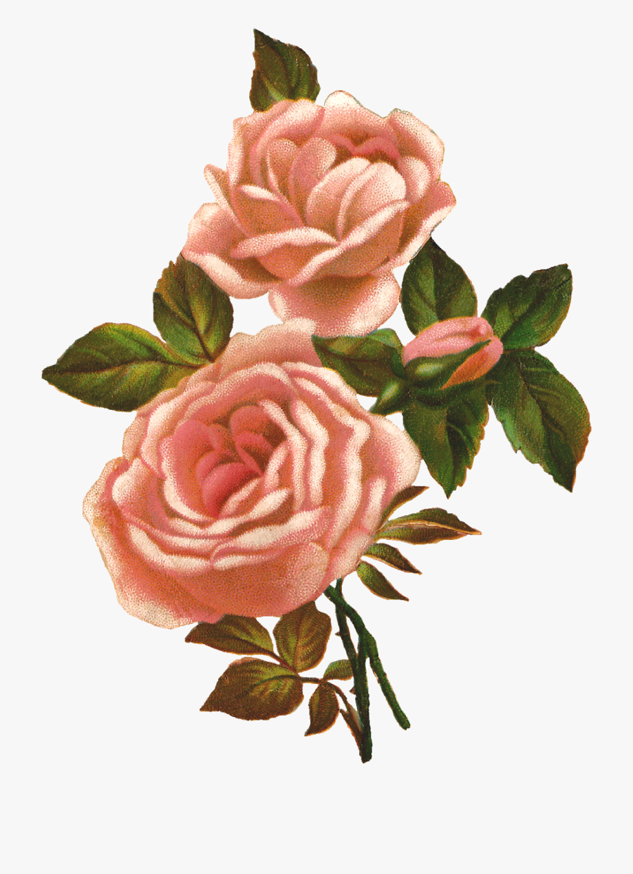 Flower clipart download. Cliparts free best pink