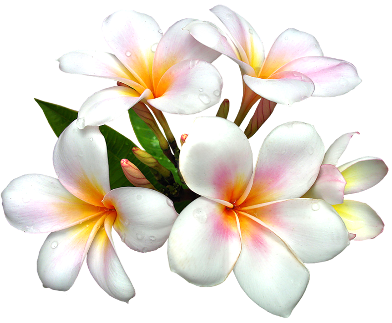 Flower clipart free png banner transparent library White Large PNG Flower Clipart | ✪ Clipart ✪ | Pinterest | Flower ... banner transparent library