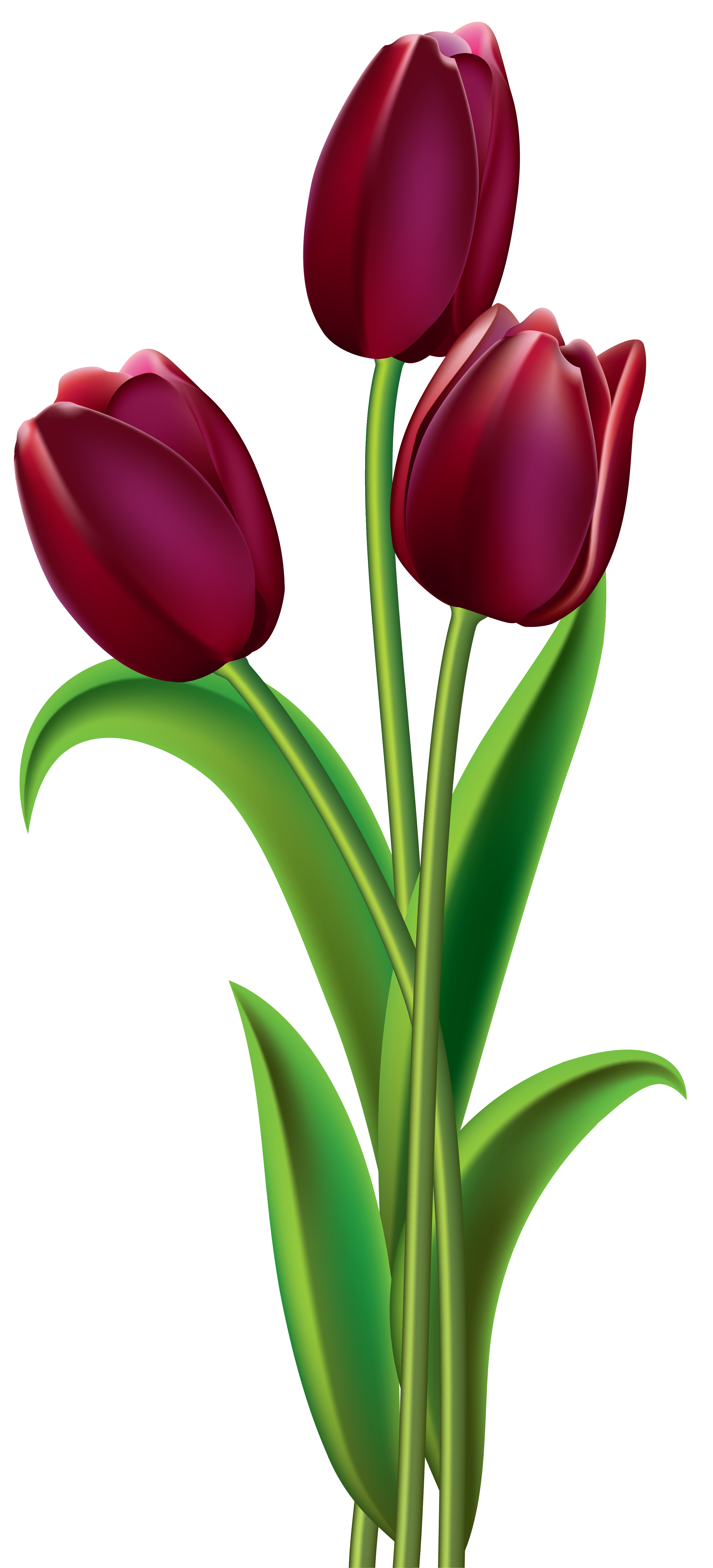 Flower clipart without background clip freeuse stock Red Dark Tulips PNG Clipart Image | Gallery Yopriceville - High ... clip freeuse stock