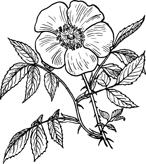 Hand drawn flower clipart banner freeuse Outline Drawing Of Flowers at GetDrawings.com | Free for personal ... banner freeuse