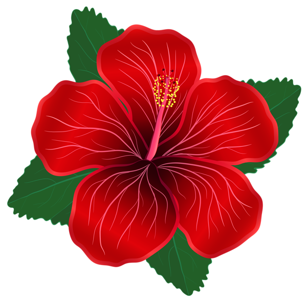 Red hawaiian flower clipart graphic free library Red Flower PNG Clipart Image | Clip Art | Pinterest | Clipart images ... graphic free library