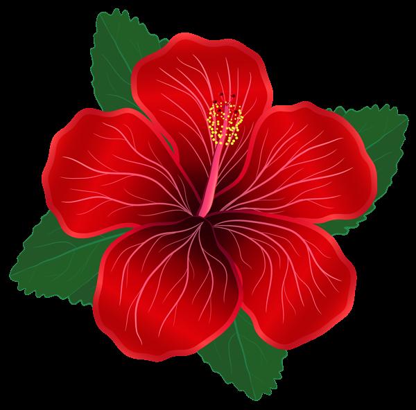 Poppy flower clipart jpg library library Red Flower PNG Clipart Image | Clip Art | Pinterest | Clipart images ... jpg library library