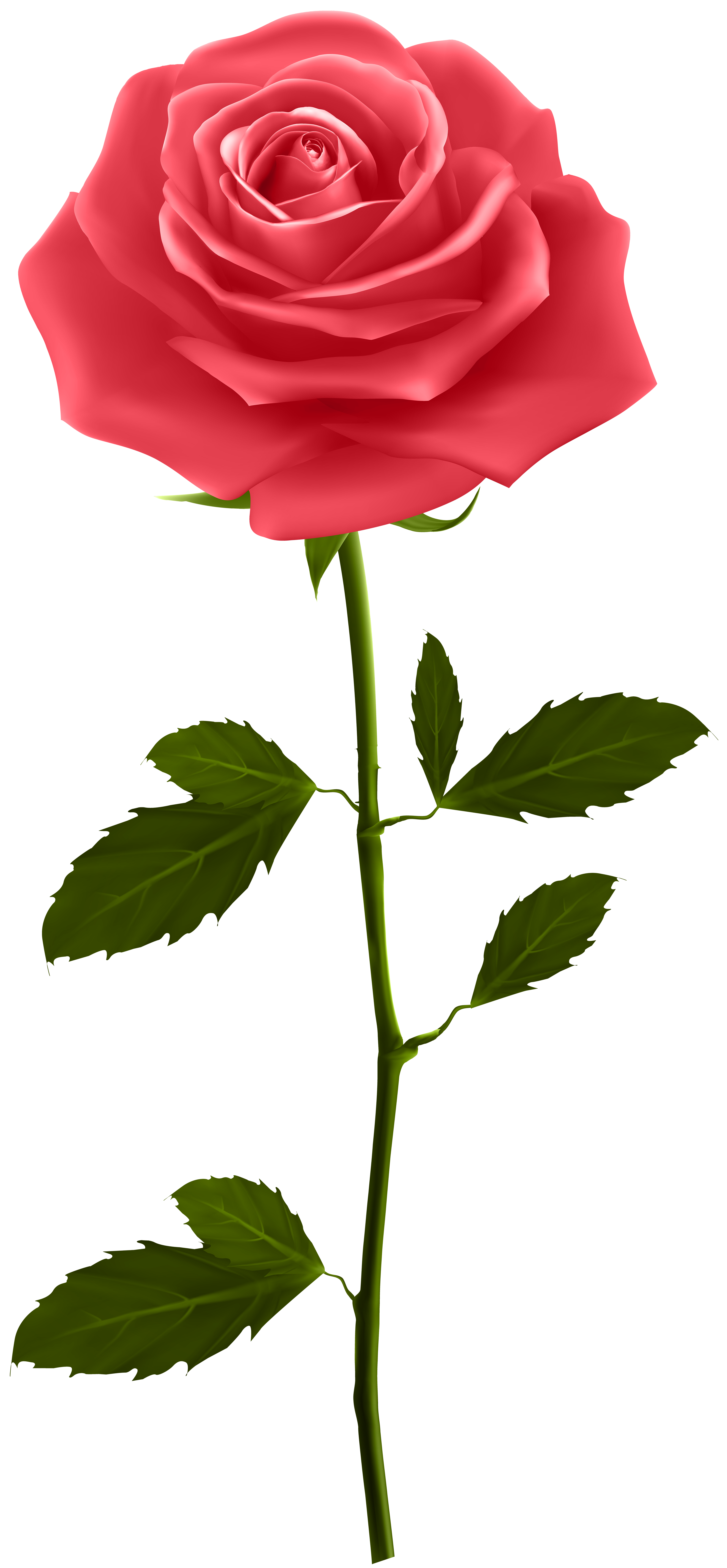 Flower clipart rose vector freeuse download Red Rose with Stem PNG Clip Art | Gallery Yopriceville - High ... vector freeuse download