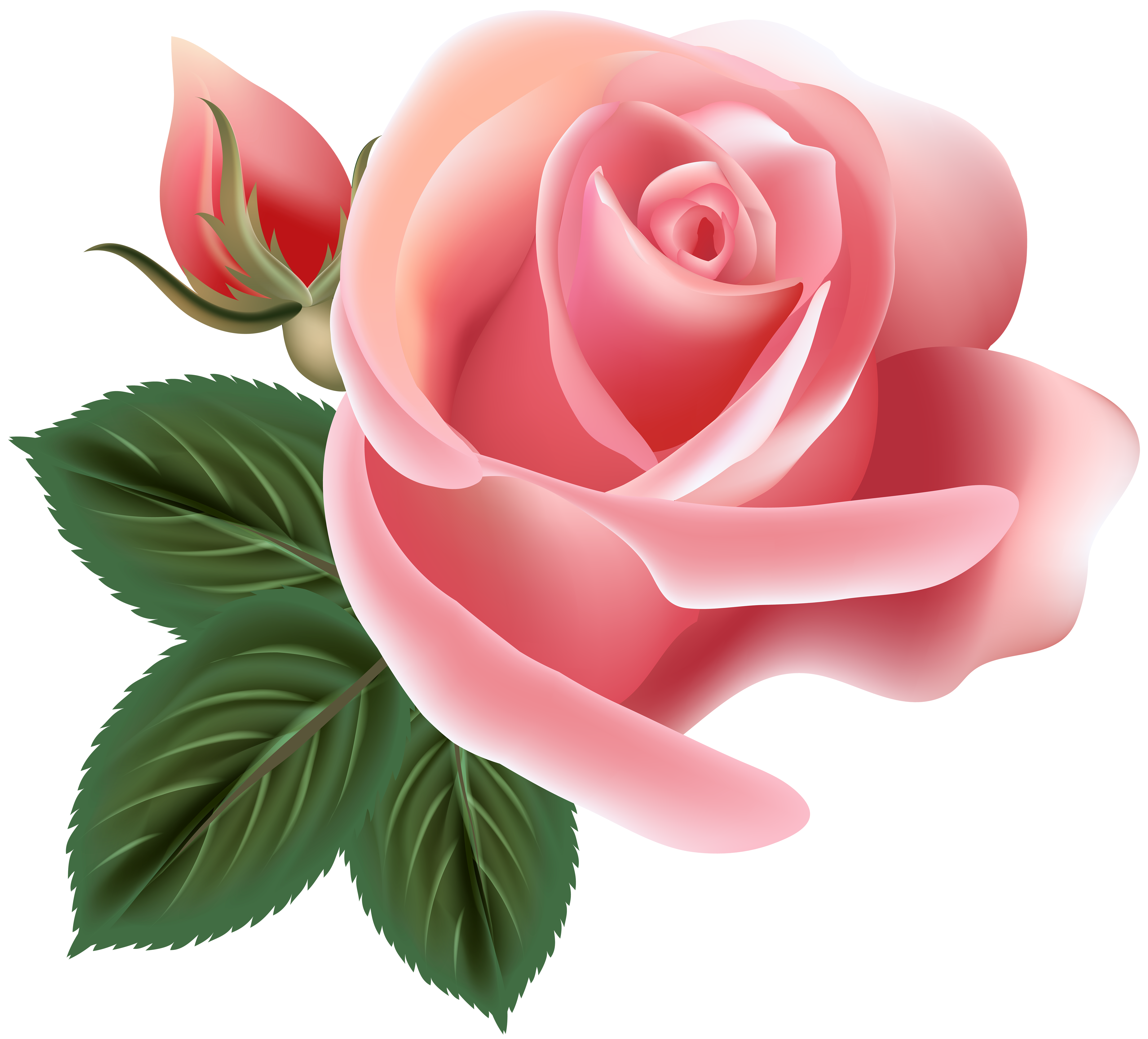 Flower clipart rose png Pin by Татьяна Саенко on фотошоп | Pinterest | Clip art, Pink roses ... png