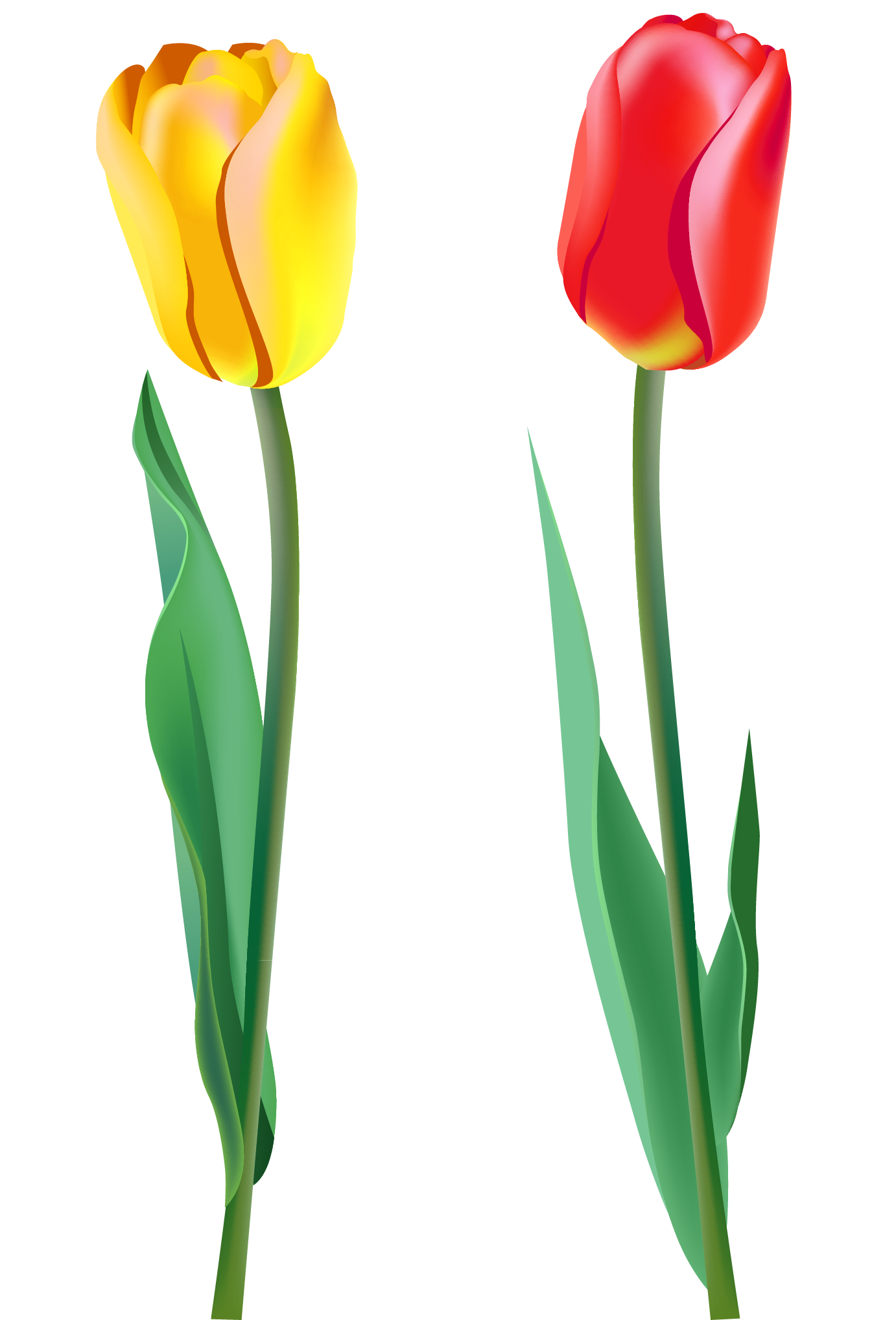 Flower clipart tulip. Png image purepng free