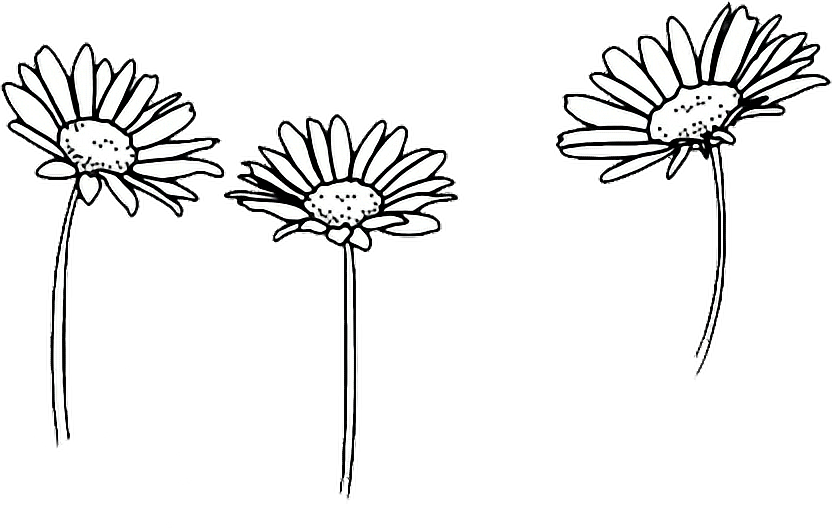 Flower clipart tumblr. Drawing outline sunflowers report