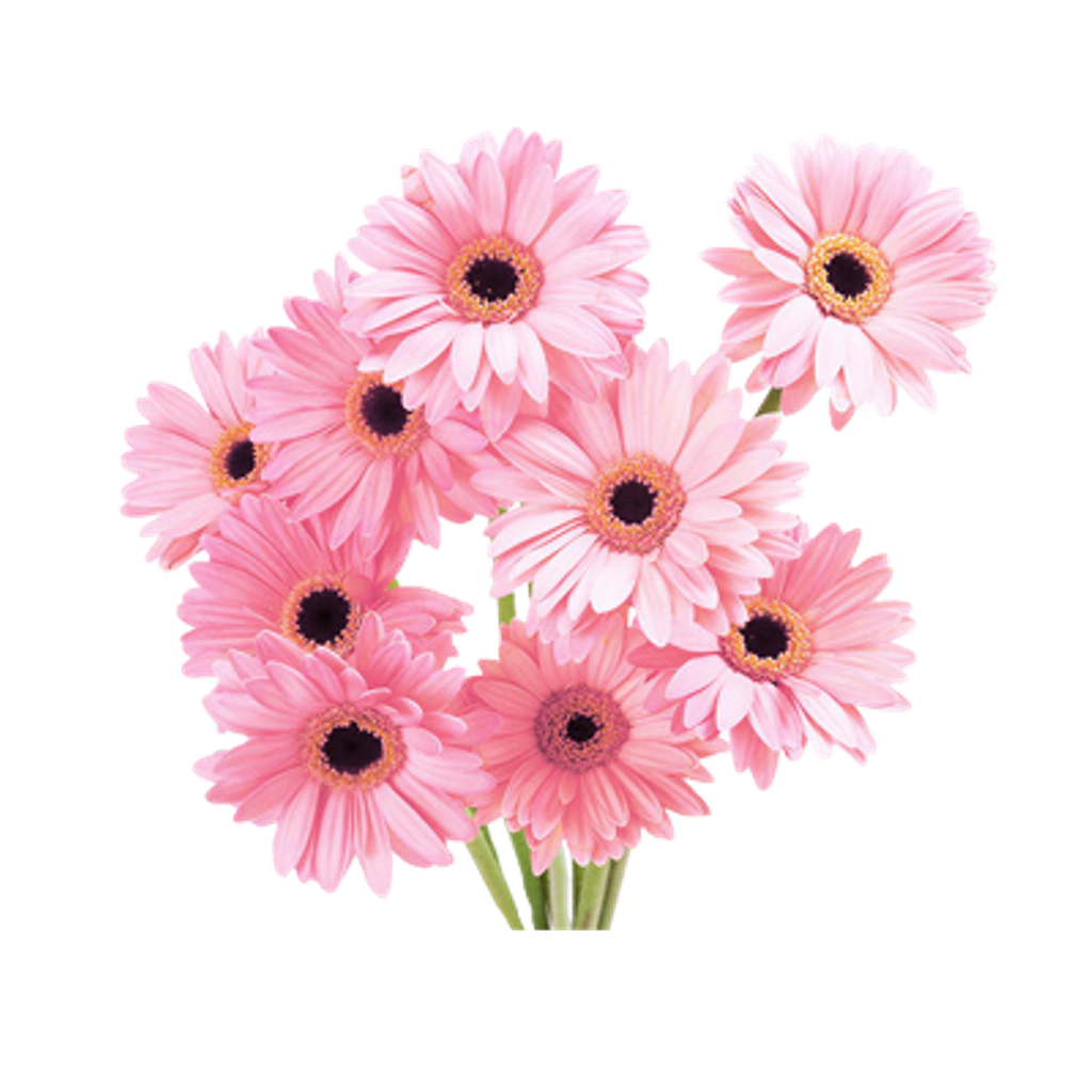 Flowers pink vaporwave aesthetic. Flower clipart tumblr