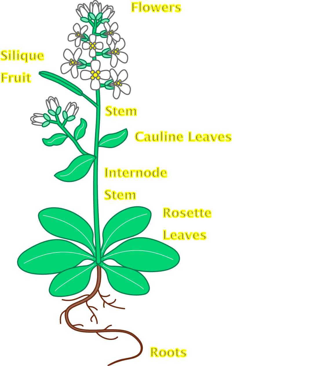 Flower parts clipart svg transparent library Flower Plant With Roots | Clipart Panda - Free Clipart Images svg transparent library
