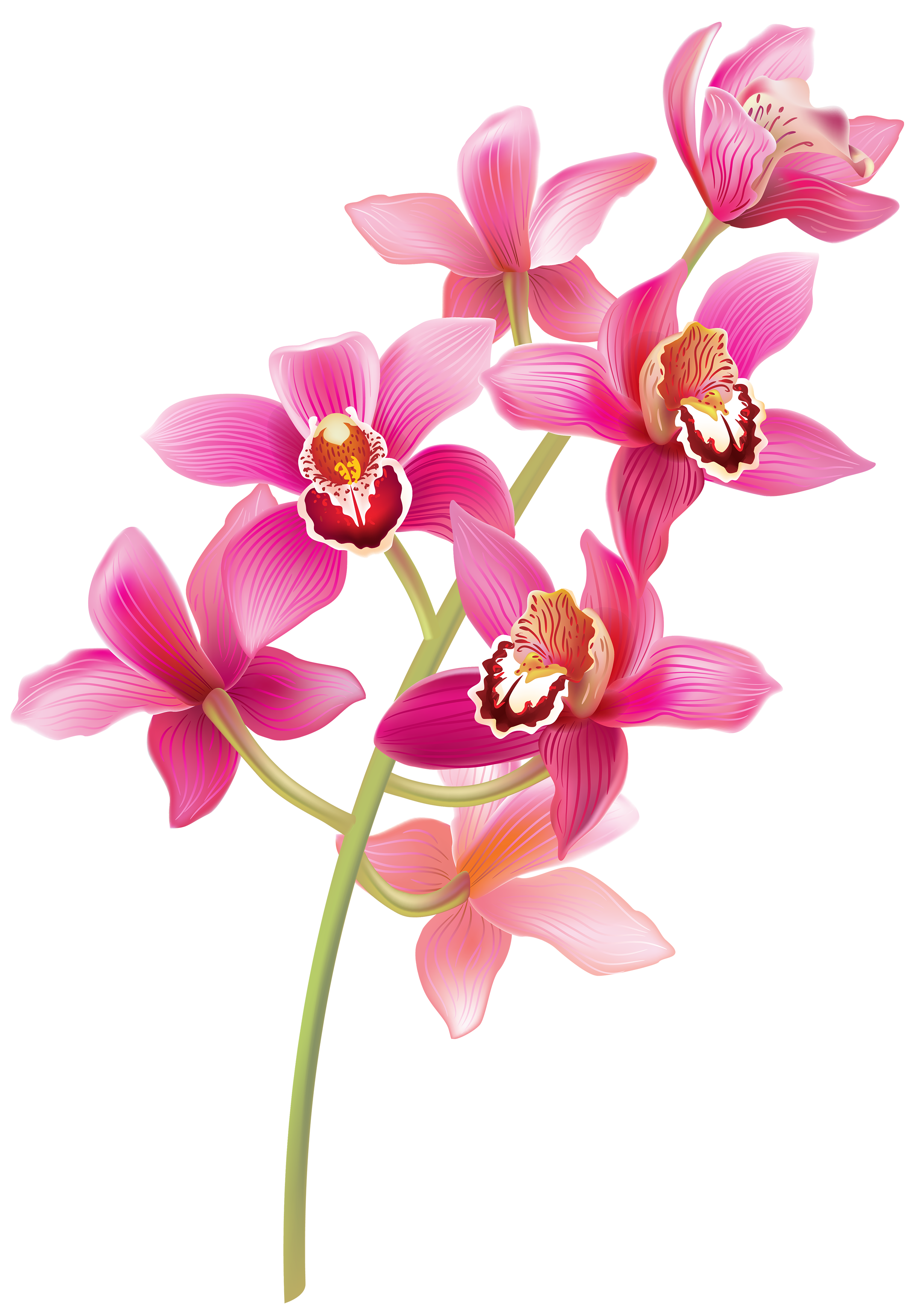 Flower clipart with stem clip royalty free Stem Pink Orchids PNG Clipart - Best WEB Clipart clip royalty free