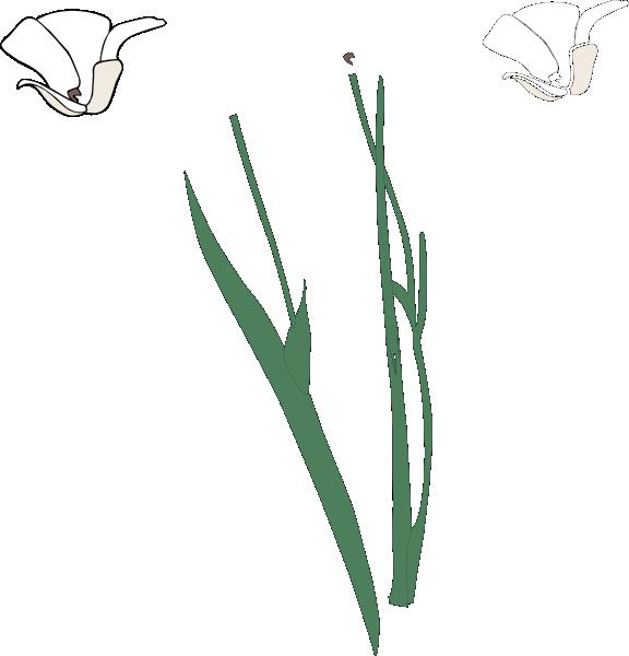 Flower clipart with stem image black and white White Long Stem Flower Broke Apart Clip Art at Clker.com - vector ... image black and white