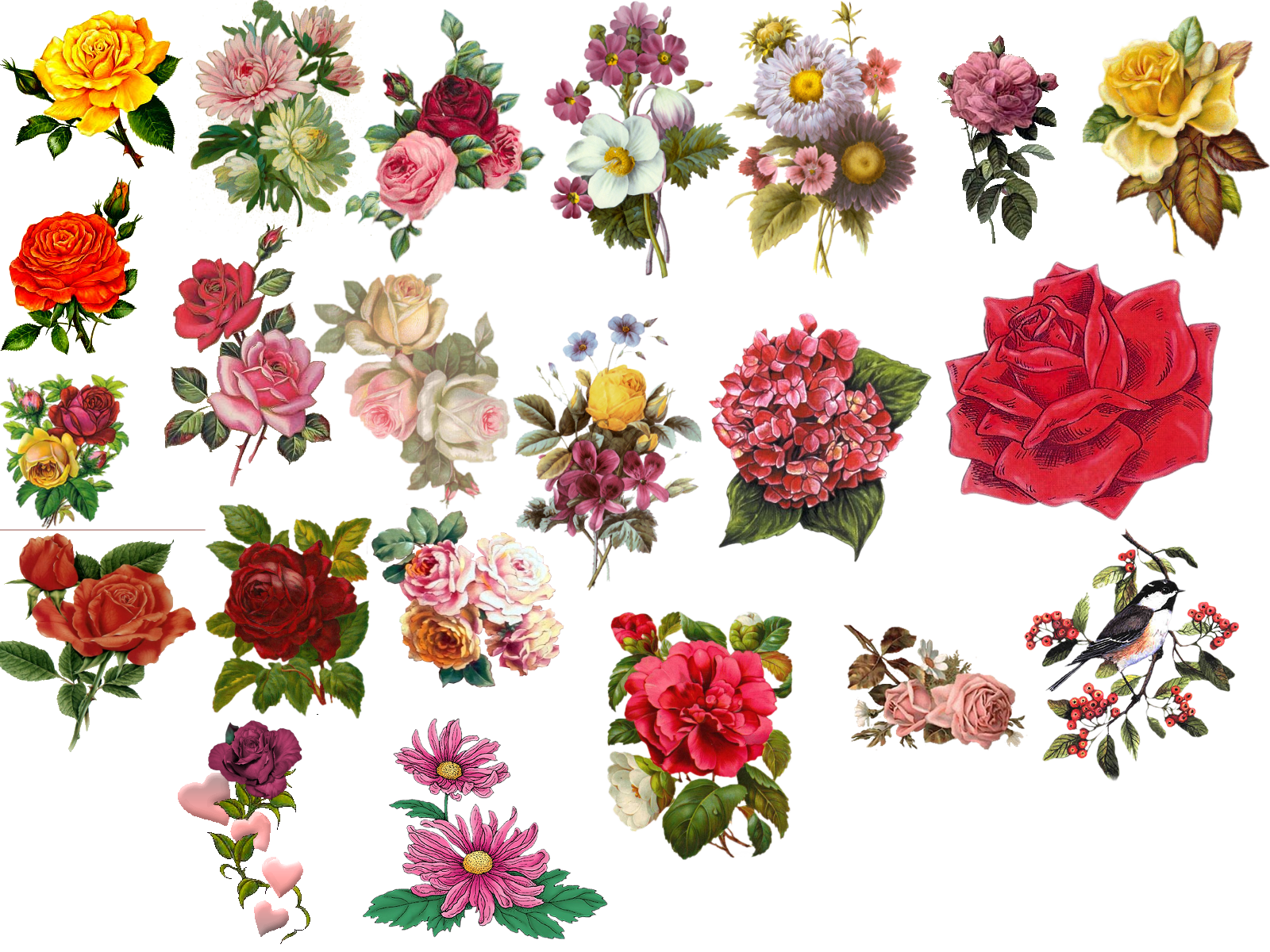 Flower collage clipart download Vintage Flower Pictures - Beautiful Flowers | hcthc | Pinterest ... download