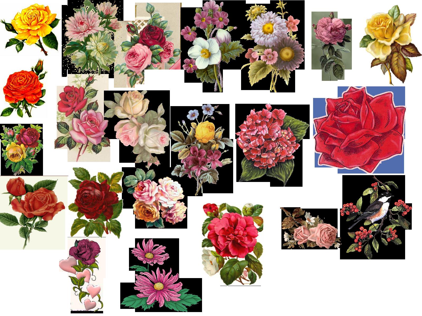 Vintage flower clipart free jpg royalty free download Vintage Flower Pictures - Beautiful Flowers | hcthc | Pinterest ... jpg royalty free download