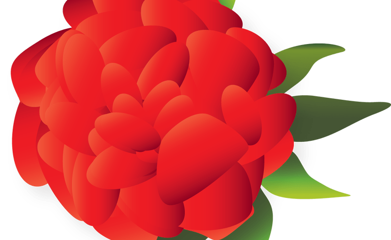 Mexican flower clipart png clipart royalty free library Cut flowers Mexican cuisine Clip art - flower 800*491 transprent Png ... clipart royalty free library