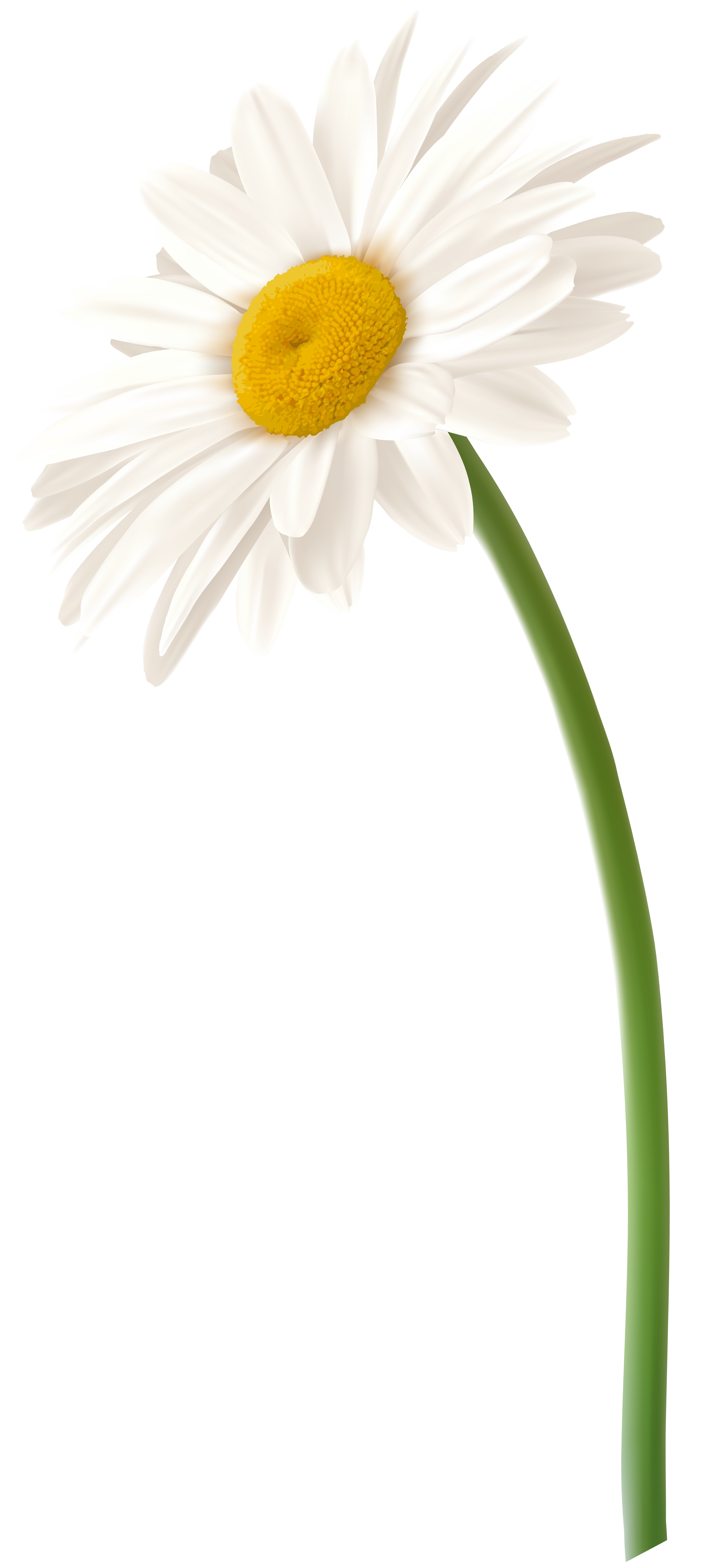 Flower daisy clipart image stock Gerbera Daisy Clipart at GetDrawings.com | Free for personal use ... image stock