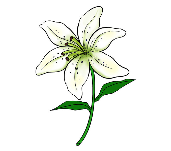Flower drawing clipart svg library 28+ Collection of Lily Clipart Easy | High quality, free cliparts ... svg library