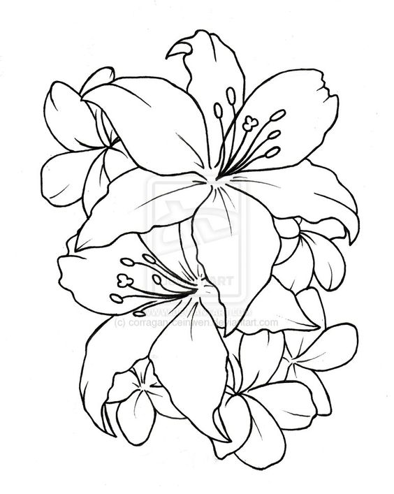 Flower drawings free download clipart free download tatto flower drawings   Ceinwen On Deviantart - Free Download ... clipart free download