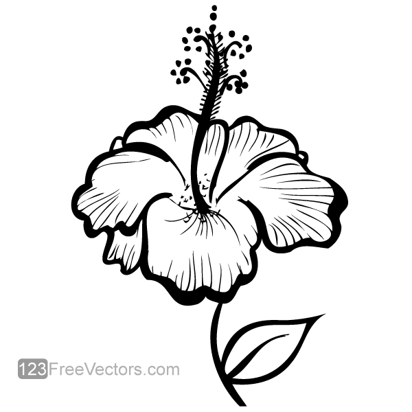 Flower drawings free download black and white Hand Drawn Hibiscus Flower Vector   Download Free Vector Art ... black and white