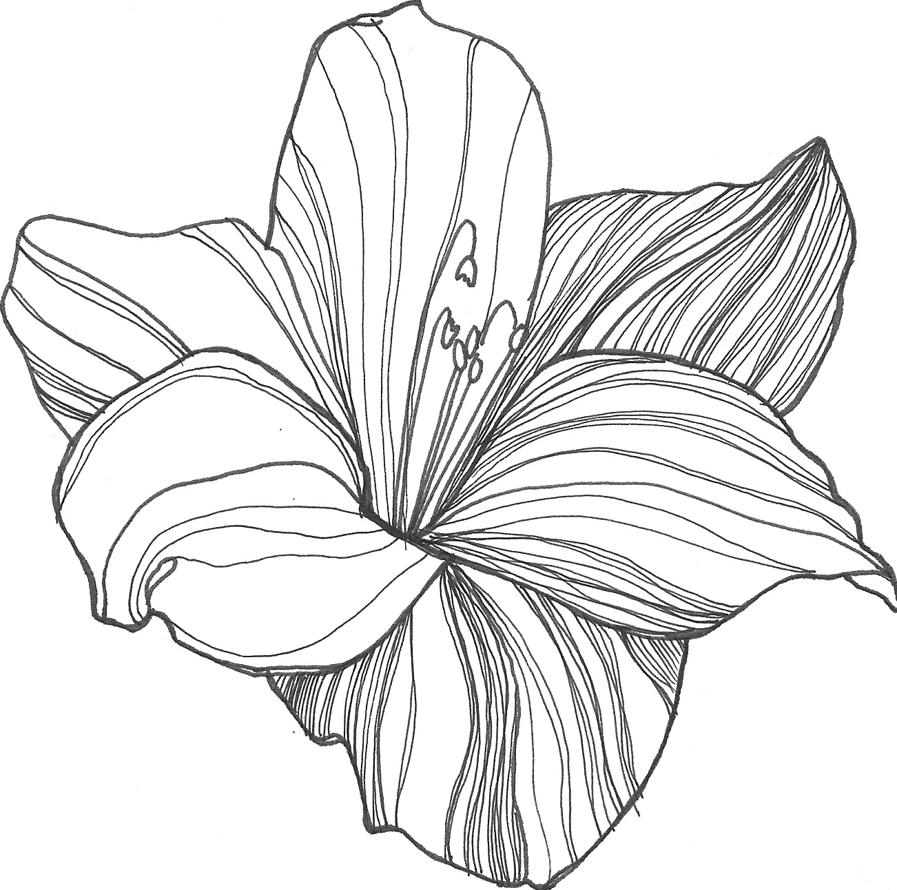 Flower drawings free download banner royalty free download Free flower drawings - ClipartFest banner royalty free download