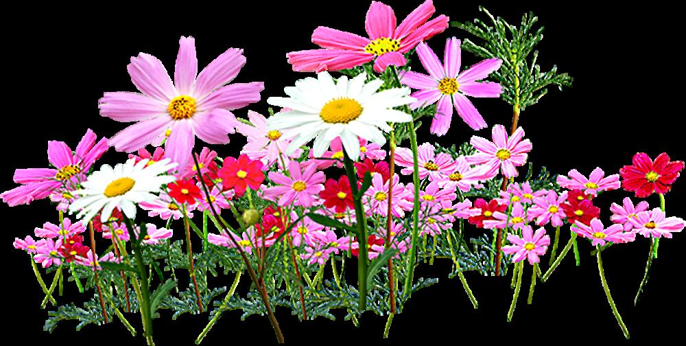 Flower garden clipart free jpg royalty free Flower garden Cut flowers Clip art - Small flower 1000*504 ... jpg royalty free