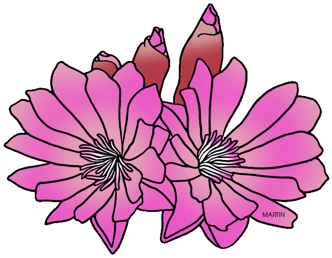 Flower group clipart vector royalty free Bitterroot Clipart Group (53+) vector royalty free