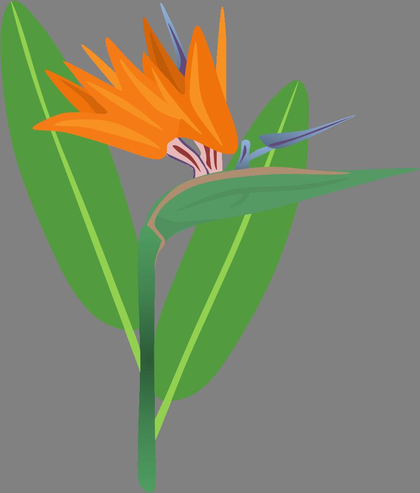 Flower head clipart. Bird of paradise free