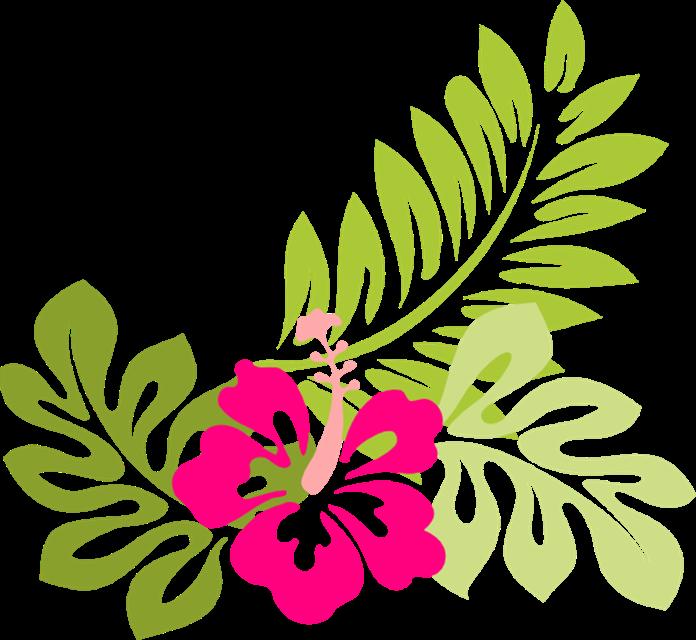 Hawaiian flowers clip art. Flower head clipart