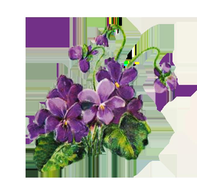 Digital scrapbooking flowers floral. Flower head clipart